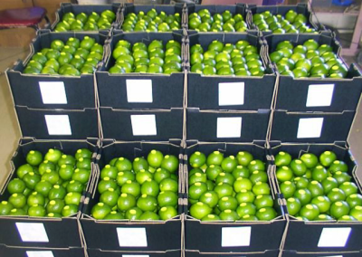 Limes, Limes and More Limes